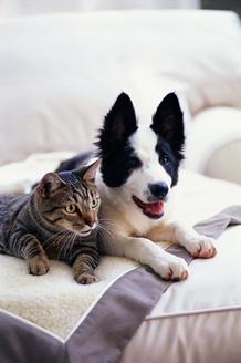Perth Pet Blankets Laundry Service